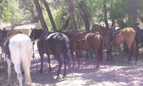 Line of horses