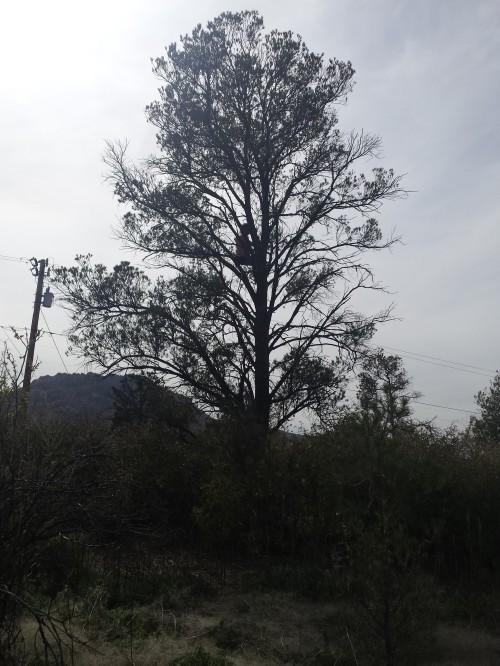 this moment tree climb